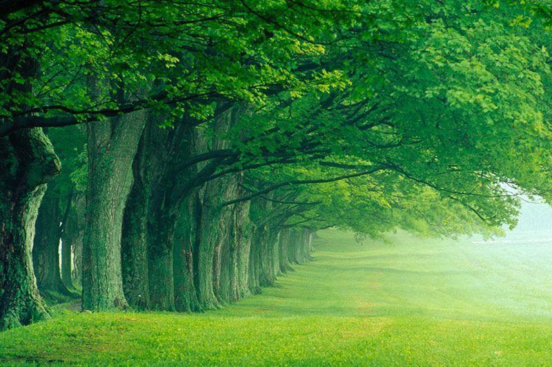 Green Print Impresión digital ecológica