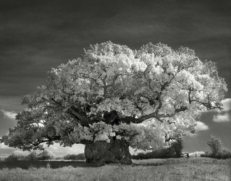 Impresión fotografía documental Imagen